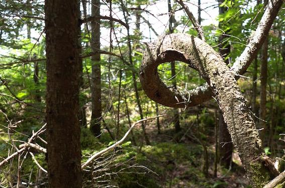 Schonmaier forest.jpg