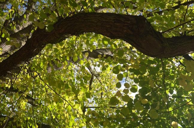 Schonmaiertrees.jpg
