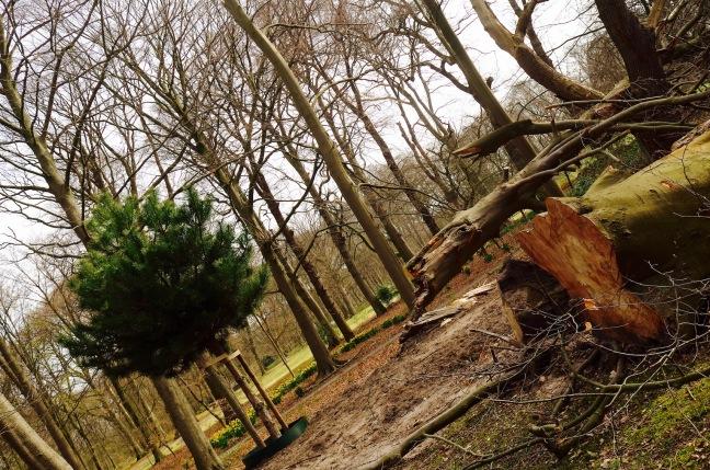 Schonmaier Heartwood.jpg