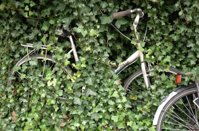 Schonmaier Cycling.jpg