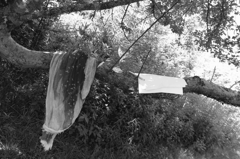 cropped-schonmaier-tree-branch.jpg